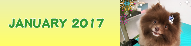 2017年1月のおともだち