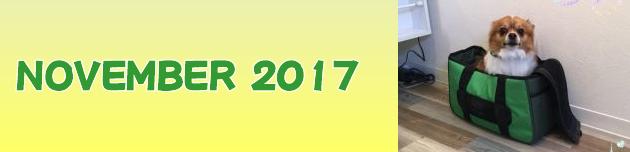 2017年11月のおともだち