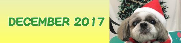 2017年12月のおともだち