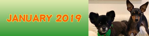 2019年1月のおともだち