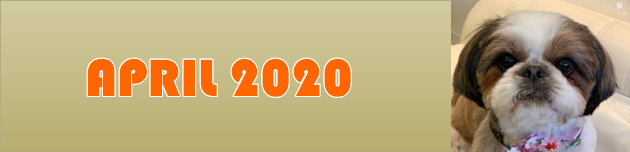 2020年4月のおともだち