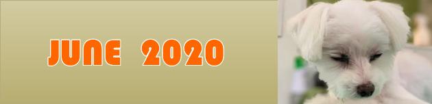 2020年6月のおともだち