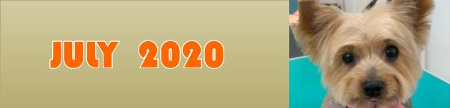 2020年7月のおともだち