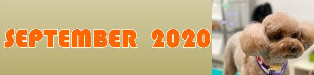 2020年9月のおともだち