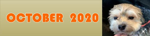 2020年10月のおともだち