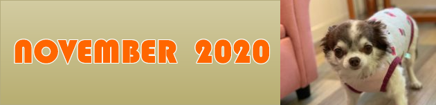 2020年11月のおともだち