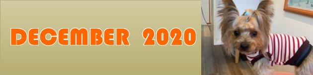 2020年12月のおともだち