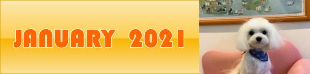 2021年1月のおともだち