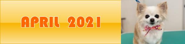 2021年4月のおともだち