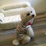 犬服ハンドメイド